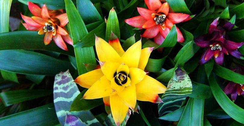 Тропические кущи Северной Пальмиры