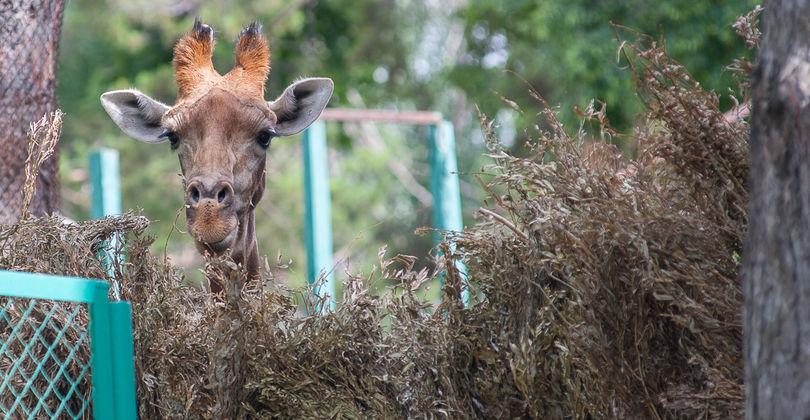 Алматинський зоопарк: Все буде добре!