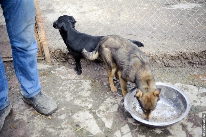 пик приют для собак рабочего времени это