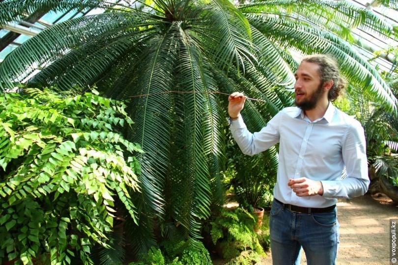Оранжерея № 16. Растения засушливых областей Африки и Америки: молочаи, кактусы, агавы. Крупнейшая коллекция суккулентов