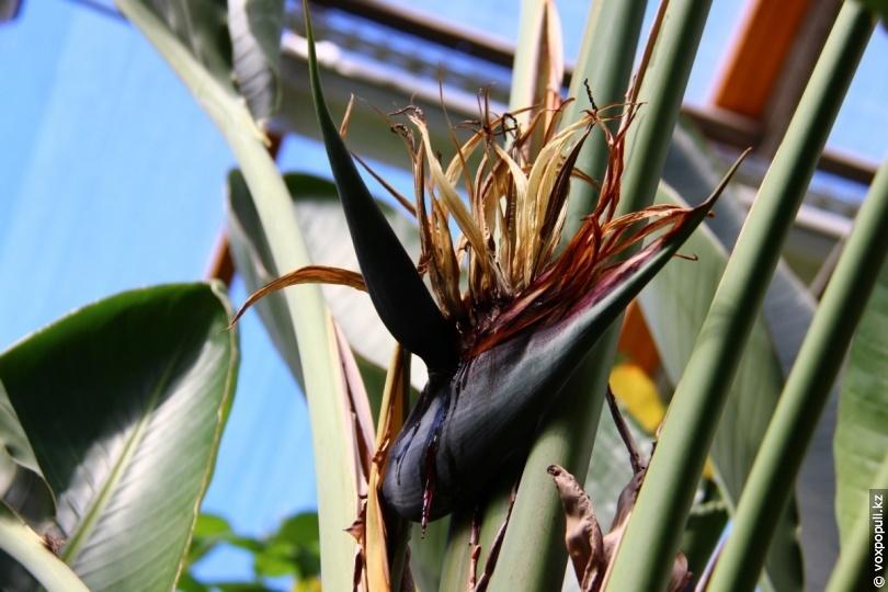 Оранжерея № 18. Растения влажного тропического леса