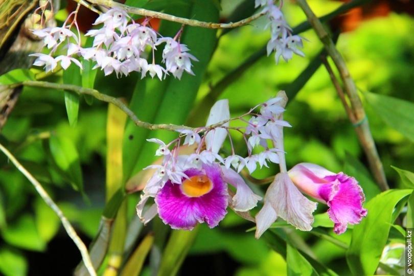 Оранжерея № 21. Декоративные травянистые растения тропиков