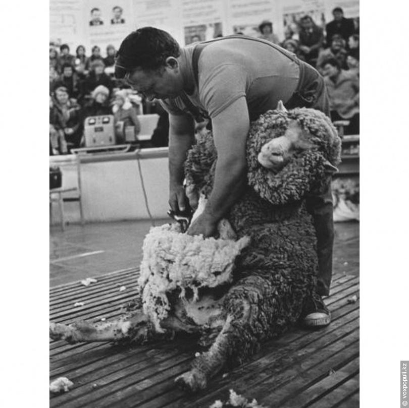 Конкурс стригалей овец. ВДНХ, май 1968 г.