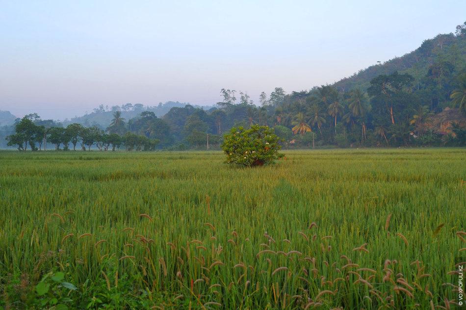 От Цейлона до Шри-Ланки