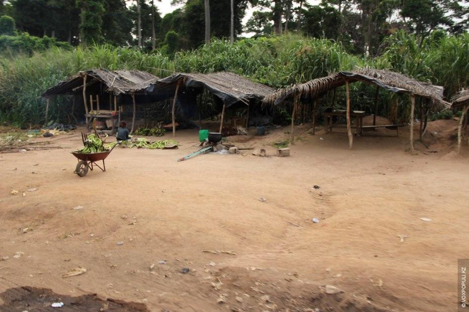 Кот-д'Ивуар занимает первое место в мире по экспорту какао. Но и других представителей агрокультуры здесь...