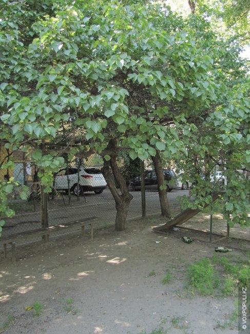 Когда деревья были выше Demo`2011
