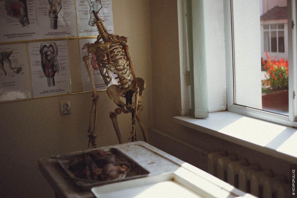 """Экскурсию решили начать с секции анатомии или """"анатомки"""", как называют ее сами студенты. Большинство легенд..."""
