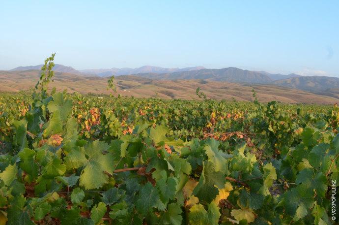 Карамкемерские виноградники находятся в долине реки Тургень, в живописном месте, окруженном горами. Выбор местности для...