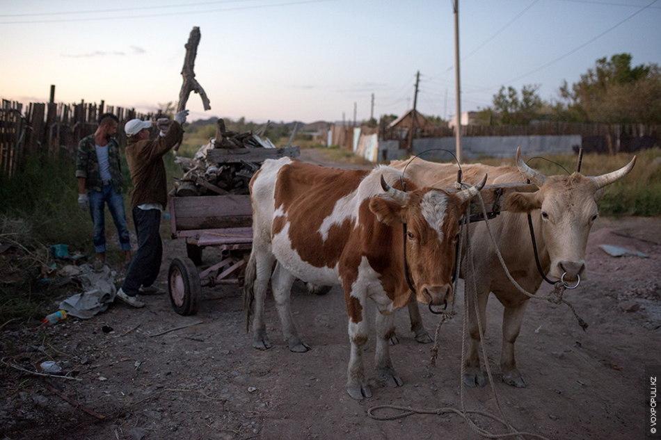 Сейчас в общине живет десять человек. Отношения с соседями-дачниками у них хорошие. Видя трудолюбие кришнаитов...