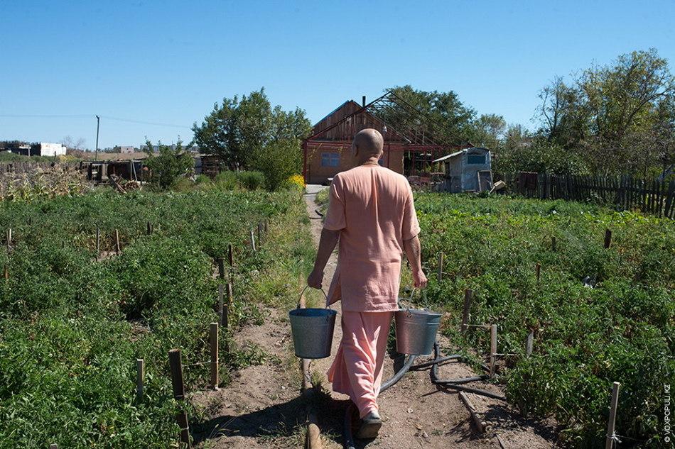 Гопичандра с ведрами надоенного молока возвращается в храм. Мы проходим через огород, засаженный помидорами, свеклой...