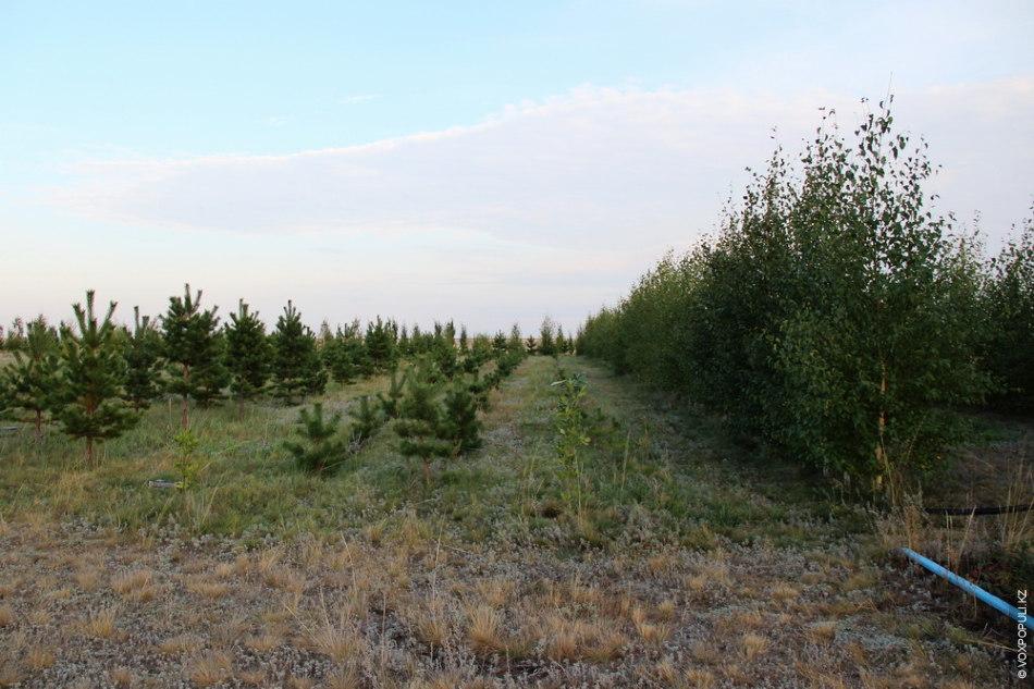 – Деревья надо сажать не ради себя, чтобы они дали плоды или тень. Должно быть...