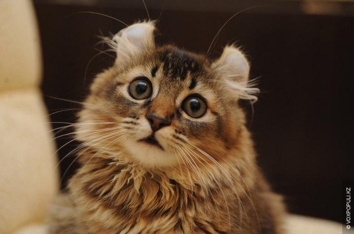 Кошки уже давно покорили сердца миллионов людей и просторы мирового интернета. Среди их поклонников встречаются...