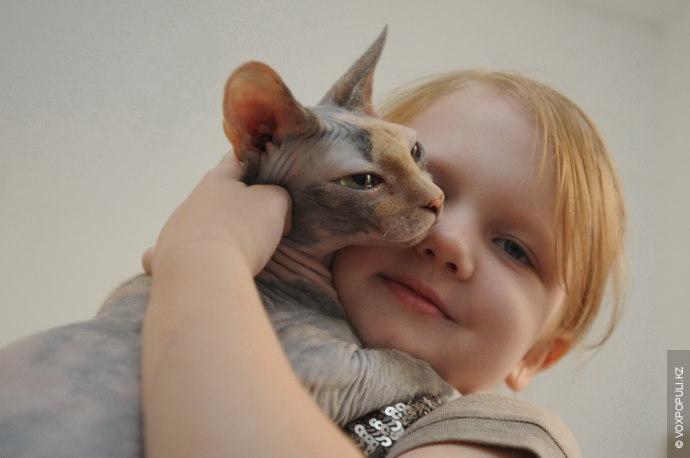 – По характеру сфинксы ближе к собакам, чем к кошкам. Они привязаны к человеку и...