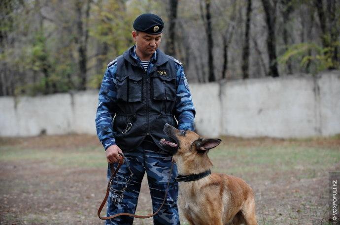 Утро служебной собаки начинается в 8.00 с прогулки. Собаке необходимо сделать свои собачьи естественные дела...