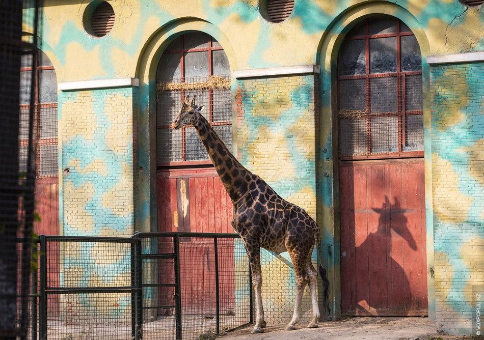 В этом зоопарке новые обитатели появляются каждый год. Администрация тратит большие деньги и на завоз...