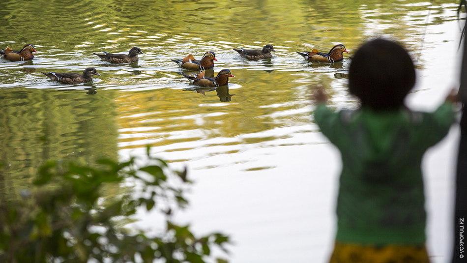 Еще один прекрасный парк Пекина – Бэйхай. Здесь можно насладиться красотами природы, а  также покормить...