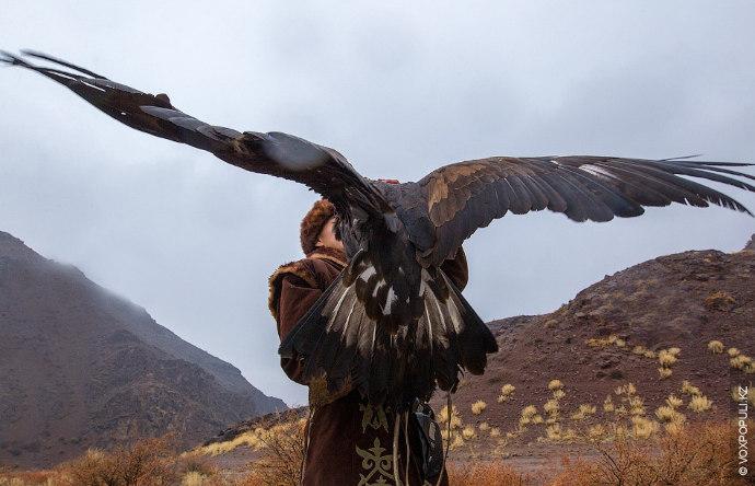 Саят - охота с беркутом - одно из самых древних занятий наших предков. Петроглифы, изображающие...