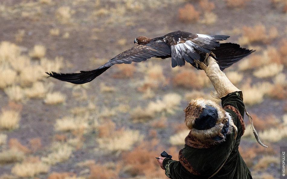 – Для того, чтобы  стать хорошим охотником, недостаточно просто любить свою птицу. Нужно стать...