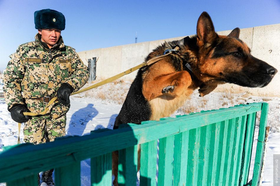 """Старший инструктор Айбек Баженов уже три года служит на заставе """"Гепопост"""":  – После призыва в армию..."""