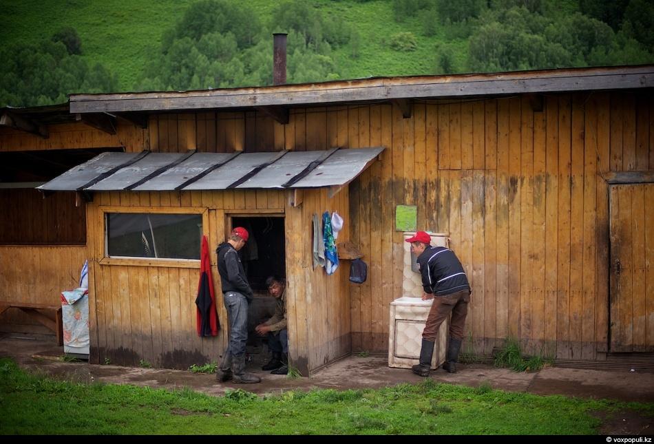 Для этого мараловоды встают в пять утра и отправляются на пастбища, где пасутся маралы...