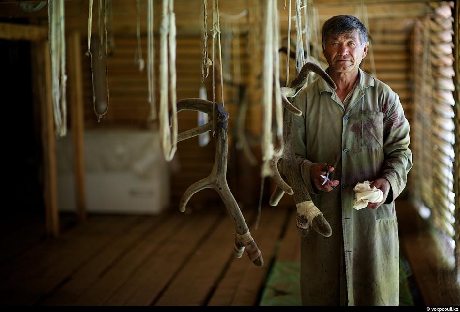 Адалберген считается главным специалистом маралового хозяйства. Он опытный пантовар с 15-летним стажем, всю свою...