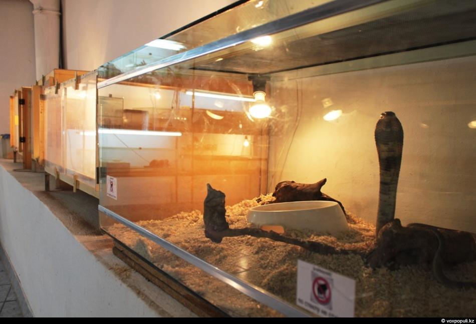 В серпентарии змей помещают в отведенные для них террариумы