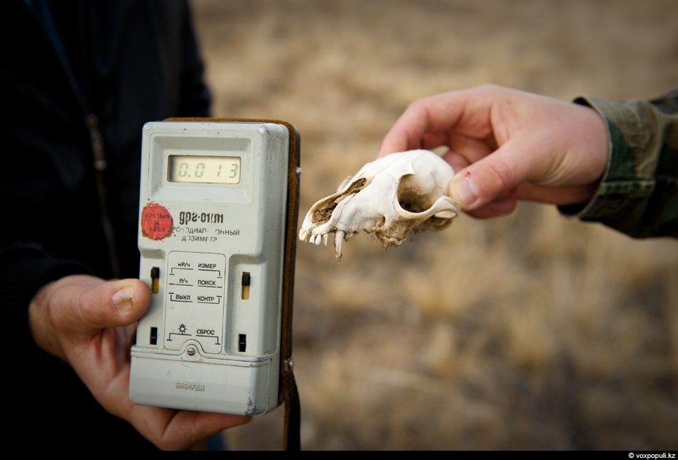 Fox's skull found close to the hole was not radioactive.
