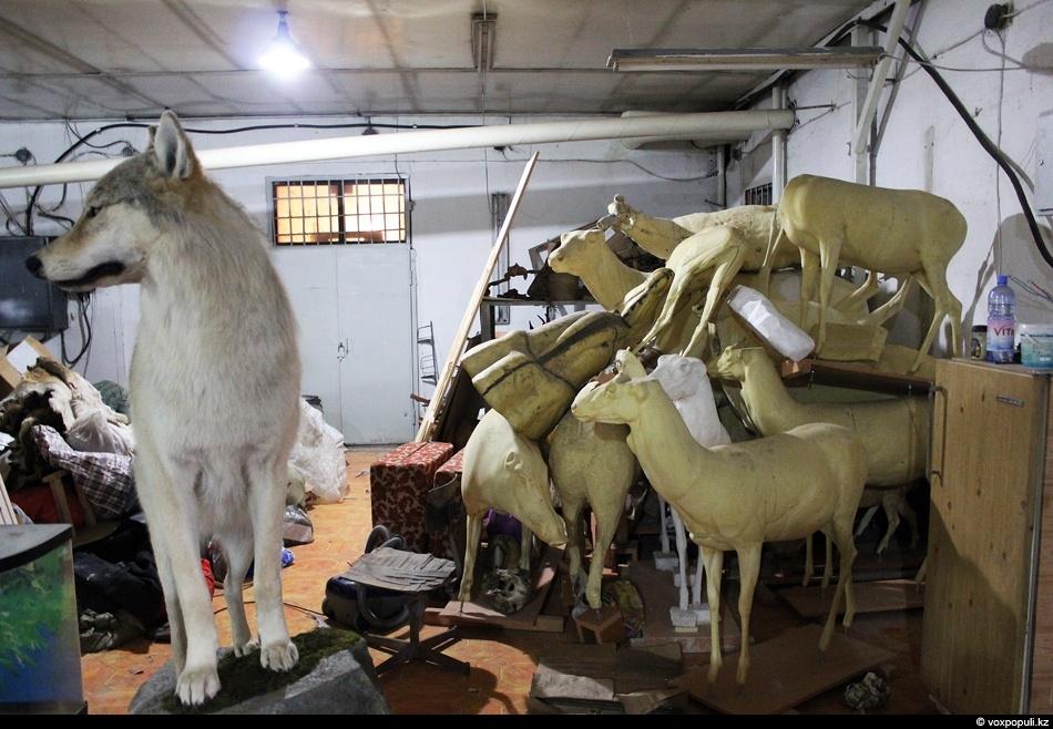 На фоне готового чучела волка лежат манекены, представляющие собой копию фигур животных в заданной позе....