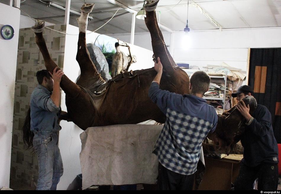 После того, как была натянута шкура на коня, его переворачивают, чтобы зашить живот