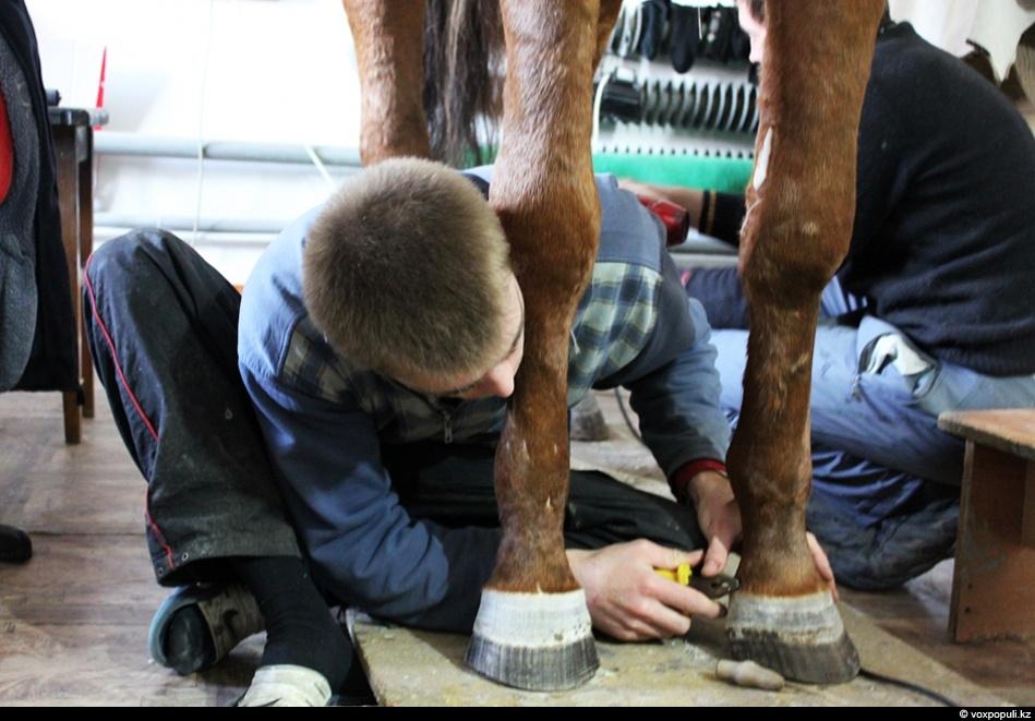 Копыта лошади также приводят в порядок, все лишнее удаляют