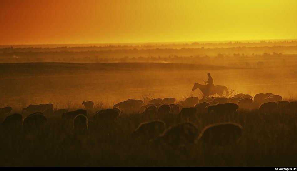 Закат в долине реки Шу. Чабан гонит свое стадо в кошару