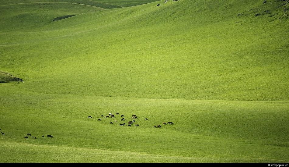 Над альпийскими лугамиВ зелени купается душа,Воздух льется синими очами,Счастье пьешь, едва дыша.И оно вдруг обретает...