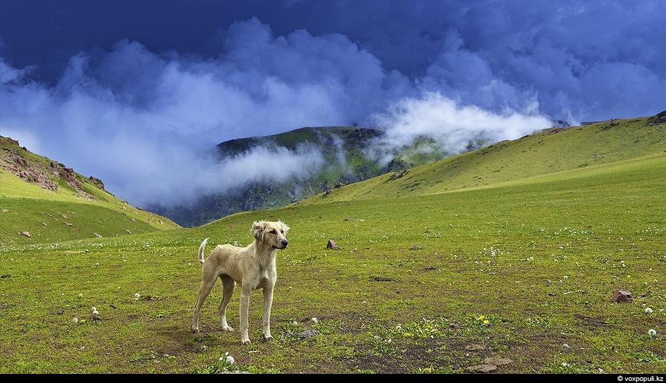 Плато Сандыктас. Кыргызский хребет