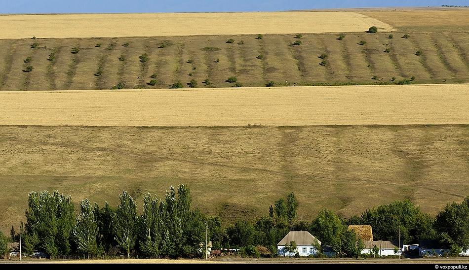 Сюрреалистические картины Жуалинской долины созданы необыкновенной изрезанностью ландшафтов, оврагами многочисленных речек, бегущих со склонов Каратау...