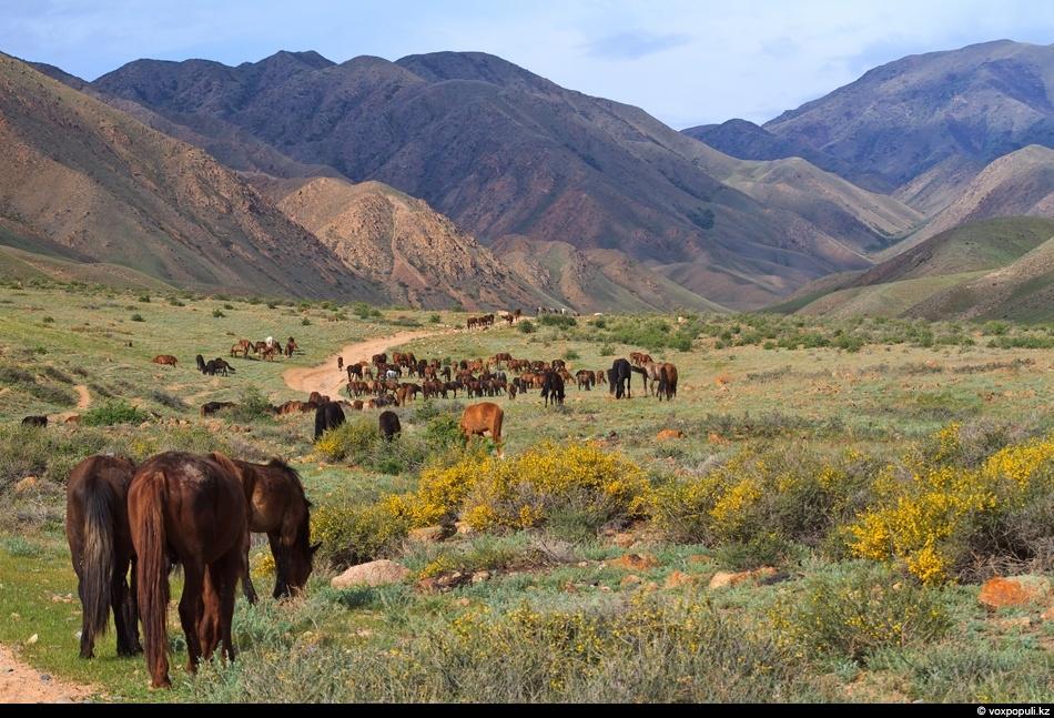 нужно природа казахстана фото и картинки жайлау системе оплаты