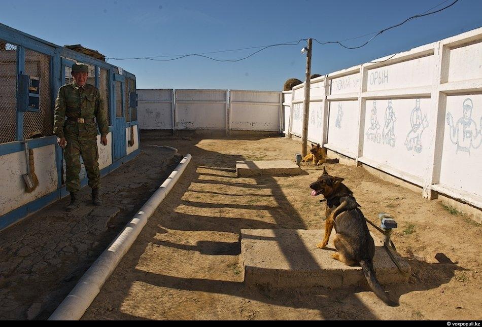 Рядовой Алпамыс Ибрашев, 20 лет, из Кызылорды«У меня всегда были способности к уходу за собаками,...