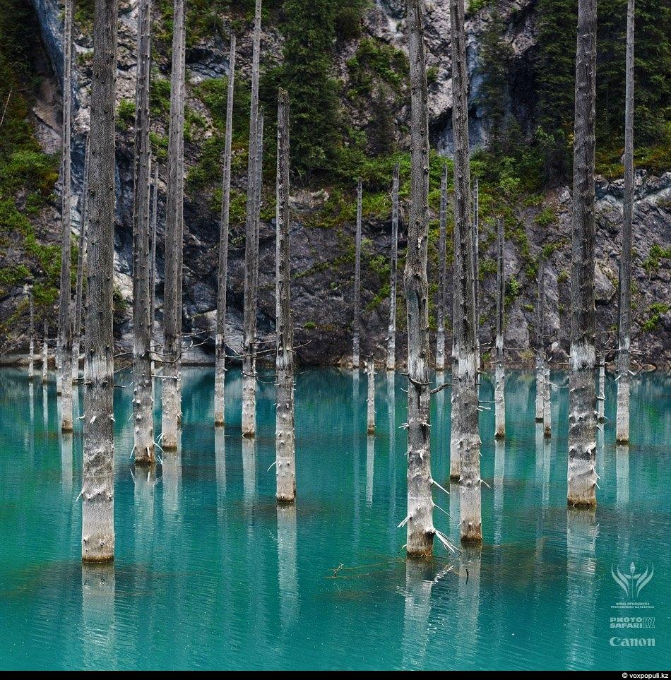 Вода, затопившая рощу два века назад, навсегда стала ледяным хранилищем для утративших жизнь стволов, которые...